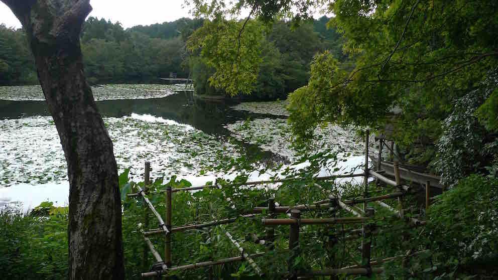 虽然是枯山水,在院里还有有一潭水的。